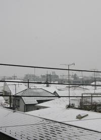2008-1-snow.jpg