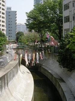 2008_5_koinobori_takokouen.jpg