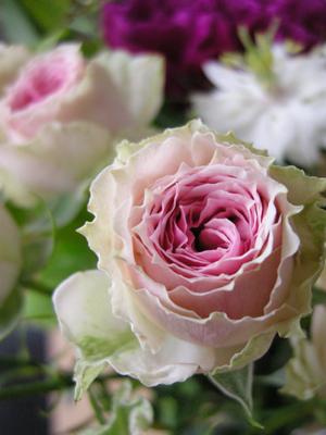 2008_5_rose.jpg