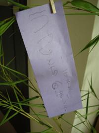 2008_6_tanabata_tanzaku.jpg