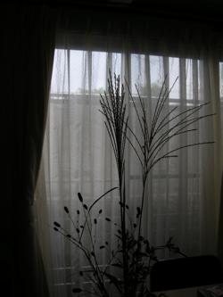 2008_9_otukimi_susuki.jpg